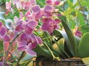 Открытка №15 Орхидеи